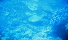 [호주] 케언즈 그레이트 베리어 리프 여행