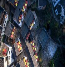 [중국] 황링...세계 최대의 샤이키우 유화 전시회 세계기록 인정