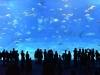 일본 속 또 다른 일본 , 오키나와 평화여행