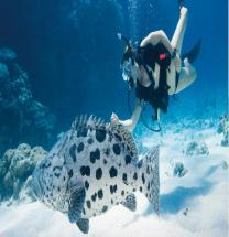 [호주] 그레이트베리어리프에서의 생애 첫 다이빙