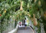 [청양] 2018 세계조롱박축제...2.4km 긴 터널에 세계 각국 희귀박 전시
