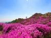 [대한민국 화첩산행100]1. 황매산, 천상의 꽃밭을 지상으로 옮겨 놓은 축제의 장
