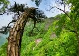 [대한민국 화첩산행 100] ⑤청량산...낙동강 줄기 따라 기암괴석과 12봉을 품고 있는 명산