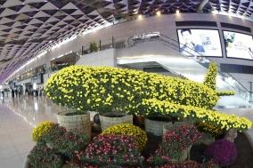 한국공항공사, 김포공항 국내선에서 가을맞이 국화전시회