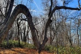 [대한민국 화첩산행 100] ⑲백덕산(1350m)...환상적인 설경과 서울대 나무로 유명한 덕스러운 산