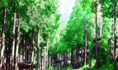 [장흥] 장흥 보림사 비자나무 숲과 정남진전망대