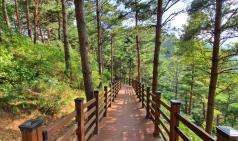 [대관령] 100년 된 금강소나무 숲...걷는 것 만으로도 치유와 힐링이 되는 곳