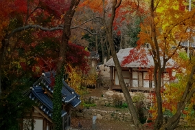 [강진] 백운동에 찾아 온 가을 단풍