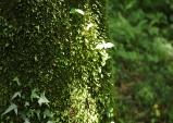 [최치선의 포토에세이] 제주 비자림...천년의 숲에서 본 정령의 모습