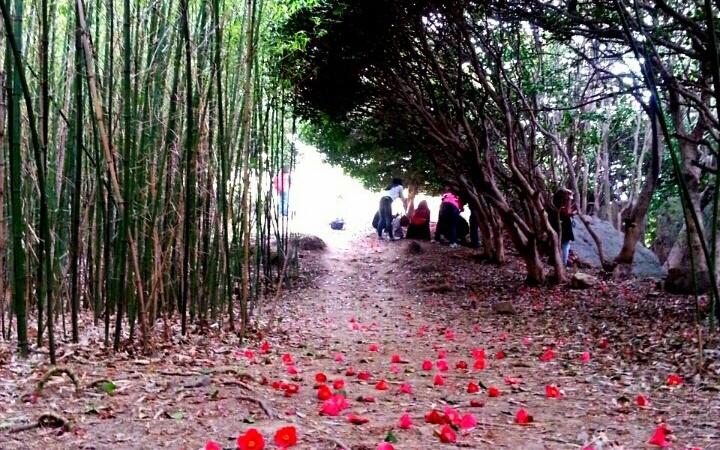 [최치선의 포토에세이]#내도...3월에는 붉은 꽃덩이가 뚝뚝 떨어지는 동백의 섬으로