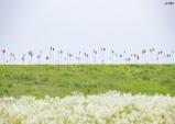 [익산시] 용안생태습지, 봄나들이 관광객 맞이 '새 단장'