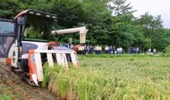 [해남군] 올해 첫 벼 수확 '폭염 속 가을걷이 진풍경'